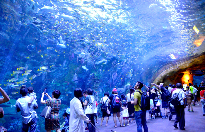 Top 10 Largest, Biggest & Best Aquariums In The World (2019 Update)