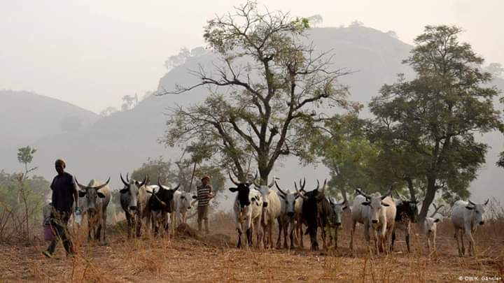 Ruga settlements for Fulani herdsmen will create breeding grounds for radical Islamic extremism and anti-Nigerianism